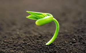 Pahami Ciri-ciri Tanah Sehat Sebelum Anda Lakukan Tips Tanam di Rumah